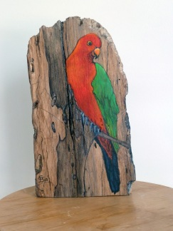 King Parrot a